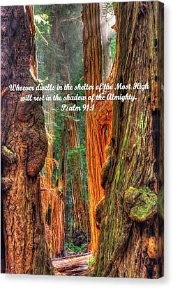 Rest In The Shadow Of The Almighty - Psalm 91.1 - From Sunlight Beams Into The Grove At Muir Woods Canvas Print by Michael Mazaika