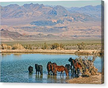 Rest Stop Canvas Print by Tammy Espino