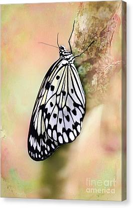 Restful Butterfly Canvas Print by Sabrina L Ryan