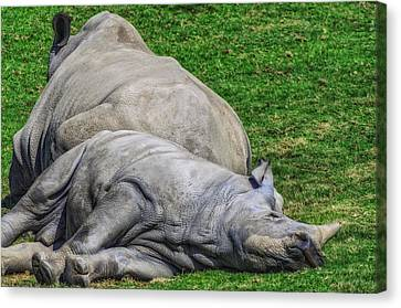 Restful Rhinoceros Canvas Print