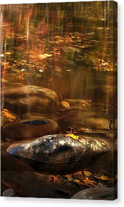 Resting Leaf Canvas Print by Andrew Soundarajan