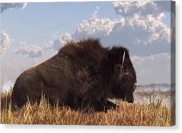 Resting Bison Canvas Print by Daniel Eskridge