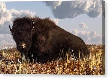 Resting Buffalo Canvas Print by Daniel Eskridge