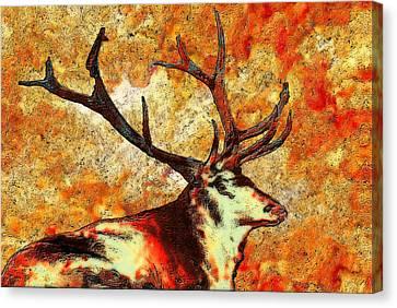 Resting Elk Canvas Print by Jack Zulli