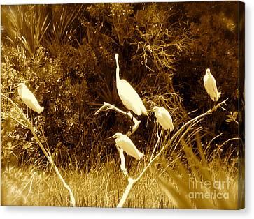 Resting Flock Sepia Canvas Print by Anita Lewis