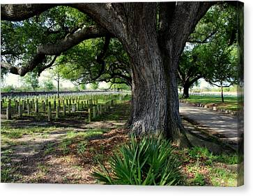 Resting In The Shade Canvas Print by Beth Vincent