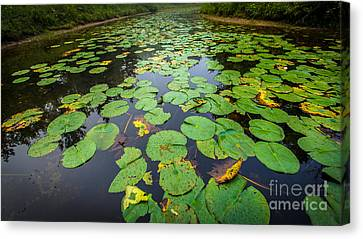 Resting Lilly Pads Canvas Print by Andrew Slater