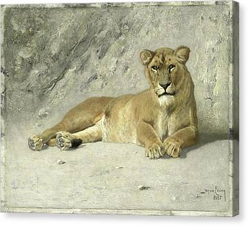 Resting Lioness, Jan Van Essen Canvas Print
