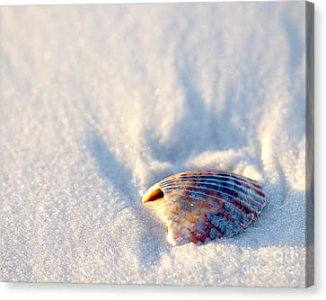 Seashell Canvas Print - Resting by Liz Masoner