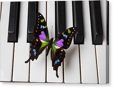 Resting On The Piano Canvas Print by Garry Gay