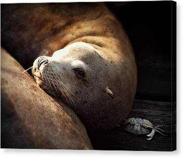 Canvas Print featuring the photograph Resting On The Pier by Micki Findlay