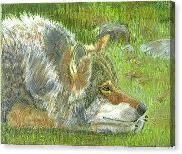 Resting Canvas Print by Ruth Seal