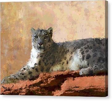Resting Snow Leopard Canvas Print by Roger D Hale