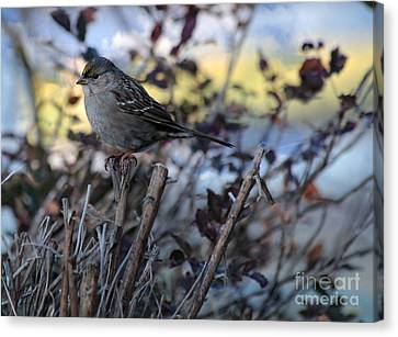 Canvas Print featuring the photograph Resting Sparrow by Marjorie Imbeau