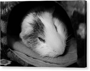 Cavy Canvas Print - Restless Sleep by Luke Moore
