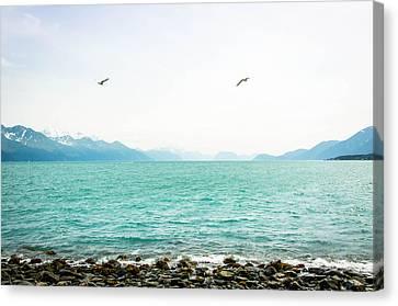 Resurrection Bay With Sea Gulls Canvas Print