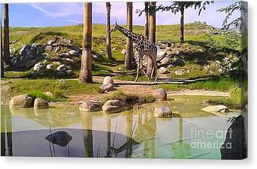 Reticulated Giraffe Canvas Print by Chris Tarpening