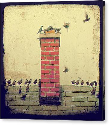 Retro Birds Canvas Print by Gothicrow Images
