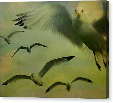 Retro Seagulls Canvas Print by Gothicrow Images