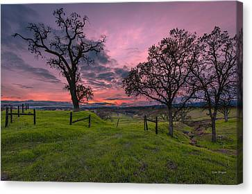 Return Of The Green Canvas Print by Tim Bryan