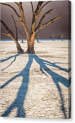 Return Of The Shadow Of The Camel Thorn - Dead Vlei Photograph Canvas Print