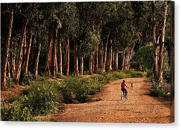 Returning Home Canvas Print by Mary Jo Allen
