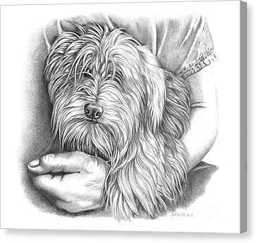 Toy Maltese Canvas Print - Rexie by Catherine Garneau