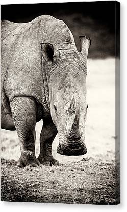 Rhino After The Rain Canvas Print by Mike Gaudaur