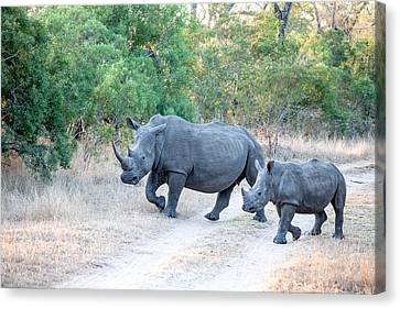 Rhino And Mom Canvas Print by Craig Brown
