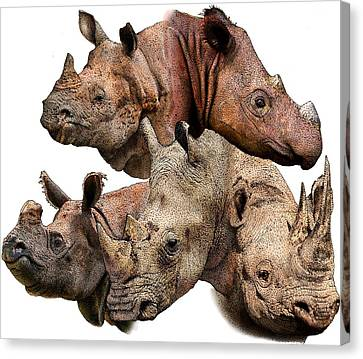 One Horned Rhino Canvas Print - Rhino Collage by Roger Hall