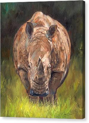 Rhino Canvas Print by David Stribbling