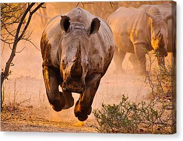 Rhino Learning To Fly Canvas Print by Justus Vermaak