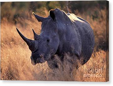 Canvas Print featuring the photograph Rhino by Michael Edwards