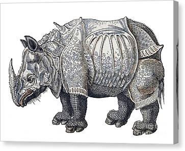 Rhinoceros, Historiae Animalium, 16th Canvas Print