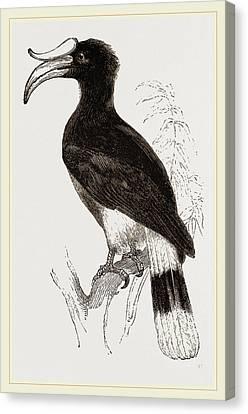Rhinoceros Hornbill Canvas Print by Litz Collection