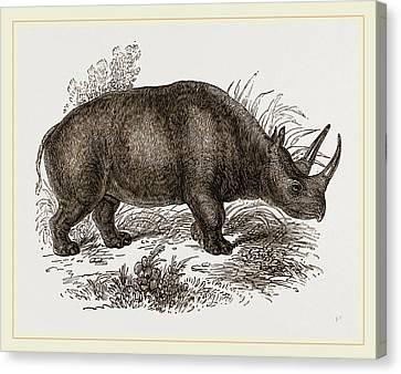 Rhinoceros Keitloa Canvas Print