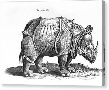Rhinoceros No 76 From Historia Animalium By Conrad Gesner  Canvas Print by Albrecht Durer