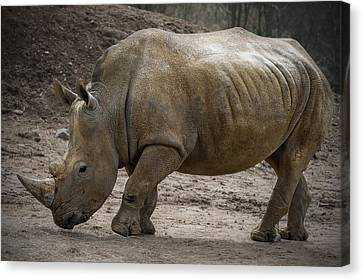 Rhinoceros Canvas Print by Svetlana Sewell