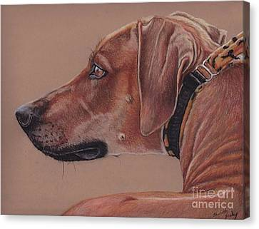 Rhodesian Ridgeback Canvas Print by Charlotte Yealey