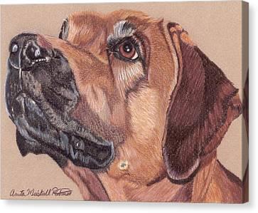 Rhodesian Ridgeback Vignette Canvas Print by Anita Putman
