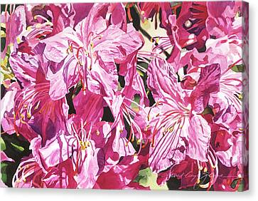 Recommended Canvas Print - Rhodo Blossoms by David Lloyd Glover