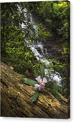 Rhododendron At The Falls Canvas Print by Debra and Dave Vanderlaan