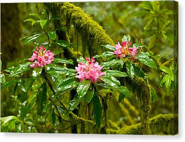 Rhododendron Flowers In A Forest Canvas Print by Panoramic Images