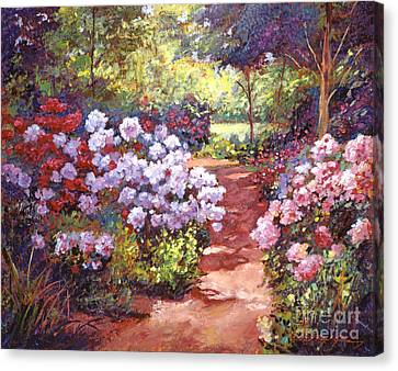 Rhododendron Stroll Canvas Print by David Lloyd Glover