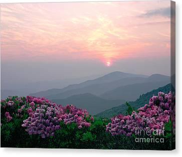 Rhododendron Sunrise Canvas Print