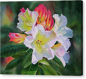 Rhododendron With Red Buds Canvas Print by Sharon Freeman