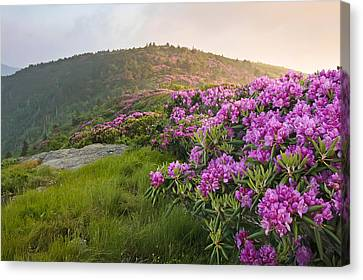 Rhododendrons On Grassy Ridge  Canvas Print by Keith Clontz
