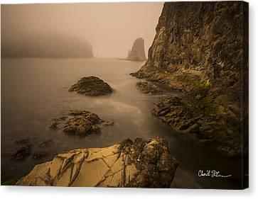 Rialto Beach Rocks Canvas Print by Charlie Duncan