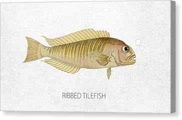 Ribbed Tilefish Canvas Print by Aged Pixel