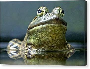 Canvas Print featuring the photograph Ribbit  by Scott Holmes